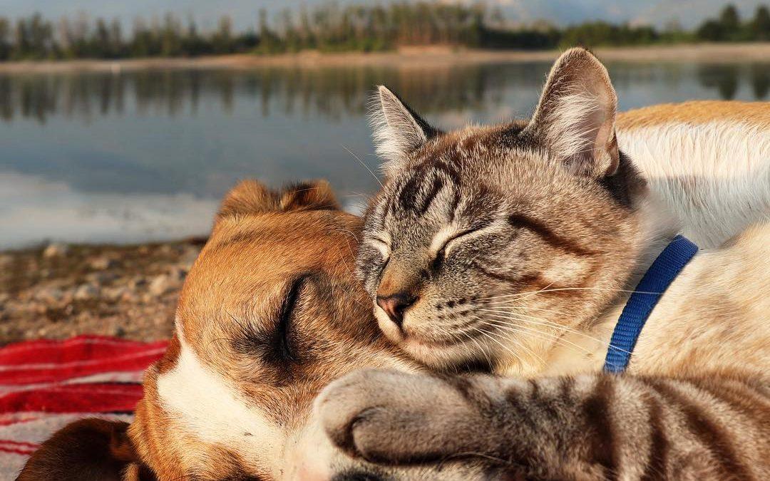 О кошке Мурке и жабьем принце